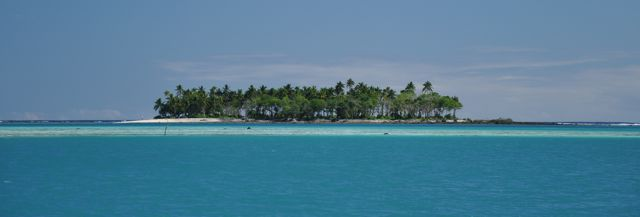 little potato